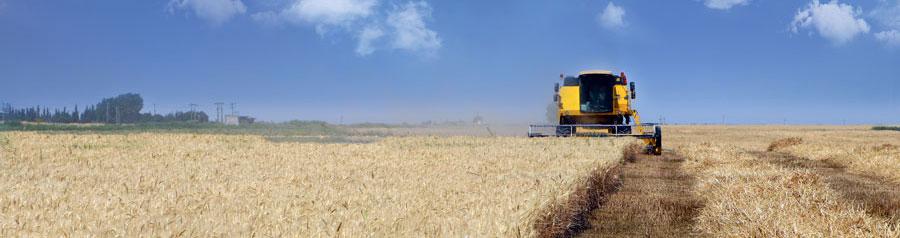 مزارع گندم شرکت ملی پارس