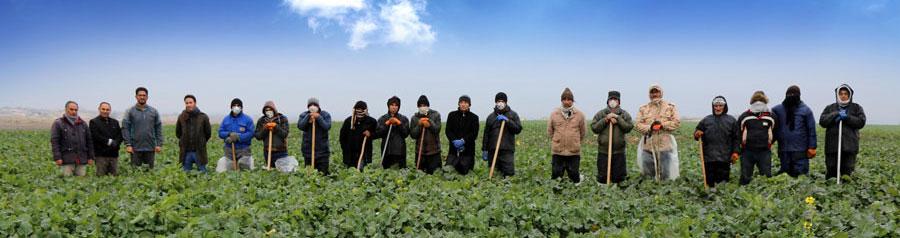 کارگران واحد زراعی شرکت ملی پارس